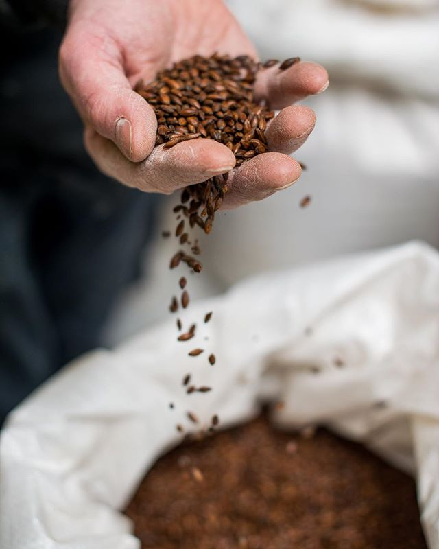 Our expert brewers specially select and mill the malted barley that is used to create the flavour and aroma in each pint of Moorhouse's #MuntonsMalt⠀ •⠀ •⠀ •⠀ •⠀ #MysticalBeers #Moorhouses #CaskAle #Beer #KegBeer #Malt #Barley #MaltedBarley #Mill #Brewery #Brewing